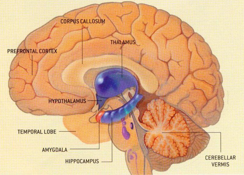 sistema endocrino  adriana salazars blog